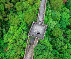 China's 88 Billion Tree Great Green Wall